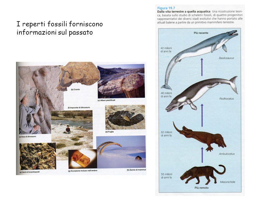 I reperti fossili forniscono informazioni sul passato