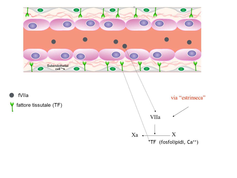fattore tissutale (TF)