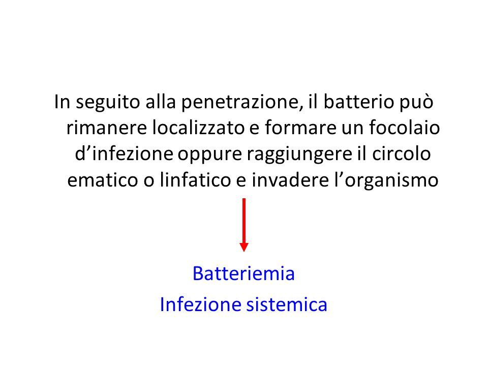 In seguito alla penetrazione, il batterio può rimanere localizzato e formare un focolaio d'infezione oppure raggiungere il circolo ematico o linfatico e invadere l'organismo