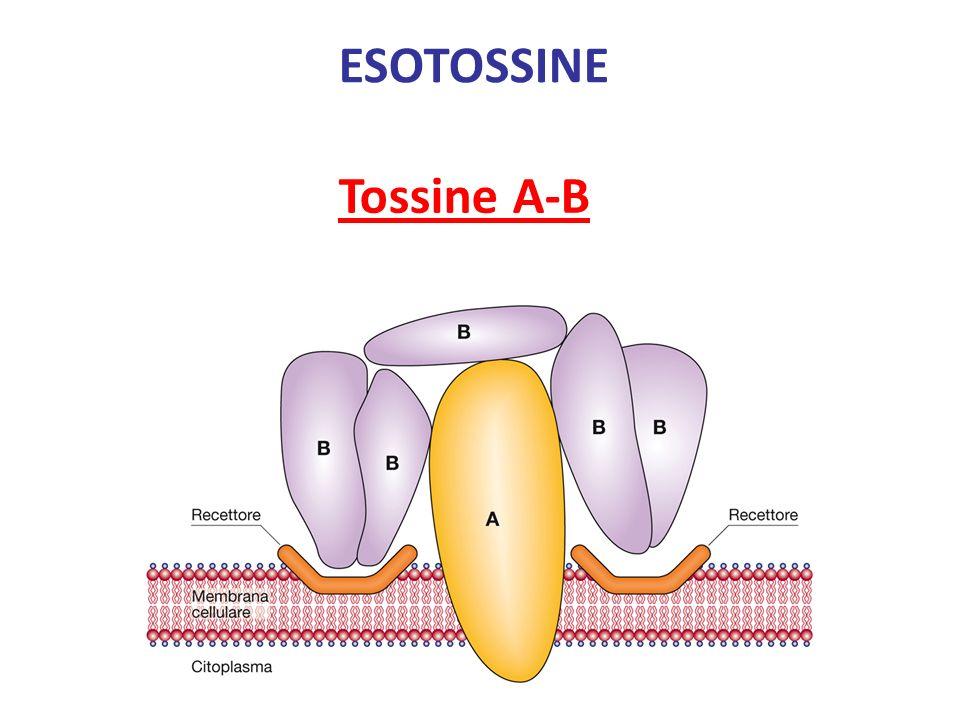 ESOTOSSINE Tossine A-B
