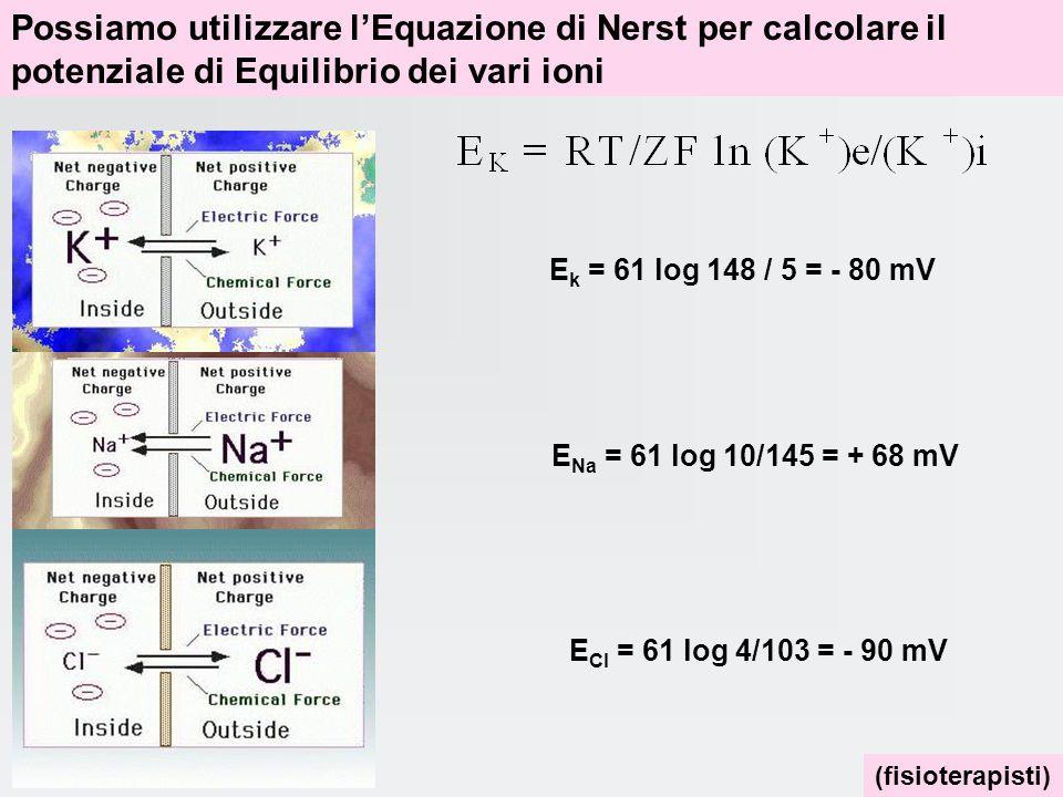Possiamo utilizzare l'Equazione di Nerst per calcolare il potenziale di Equilibrio dei vari ioni