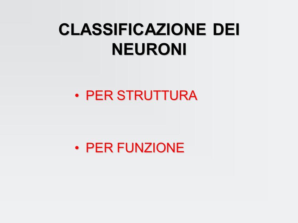 CLASSIFICAZIONE DEI NEURONI