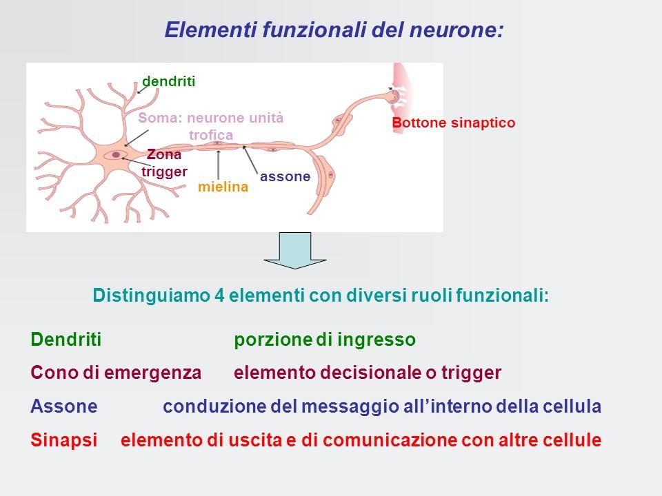 Elementi funzionali del neurone: