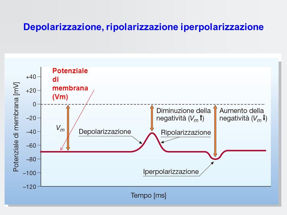 Depolarizzazione, ripolarizzazione iperpolarizzazione