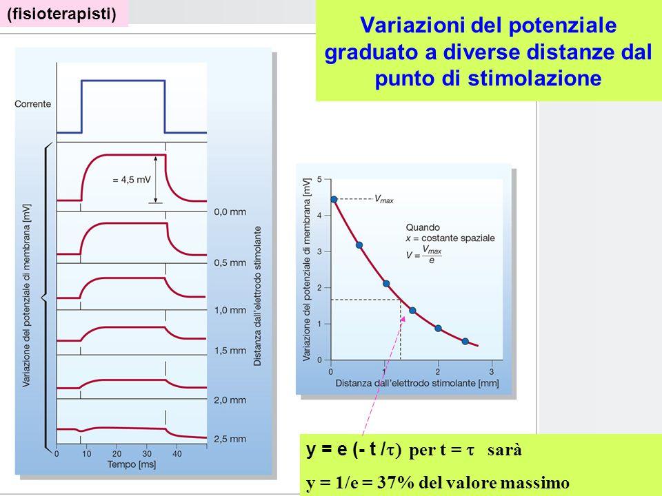 (fisioterapisti)Variazioni del potenziale graduato a diverse distanze dal punto di stimolazione. y = e (- t /t) per t = t sarà.