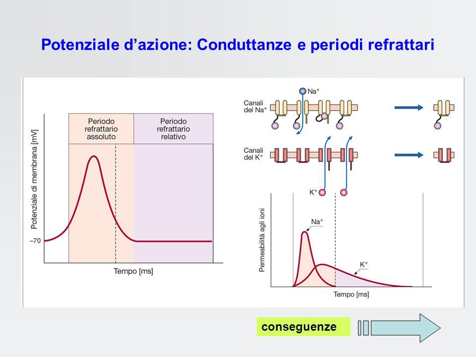 Potenziale d'azione: Conduttanze e periodi refrattari
