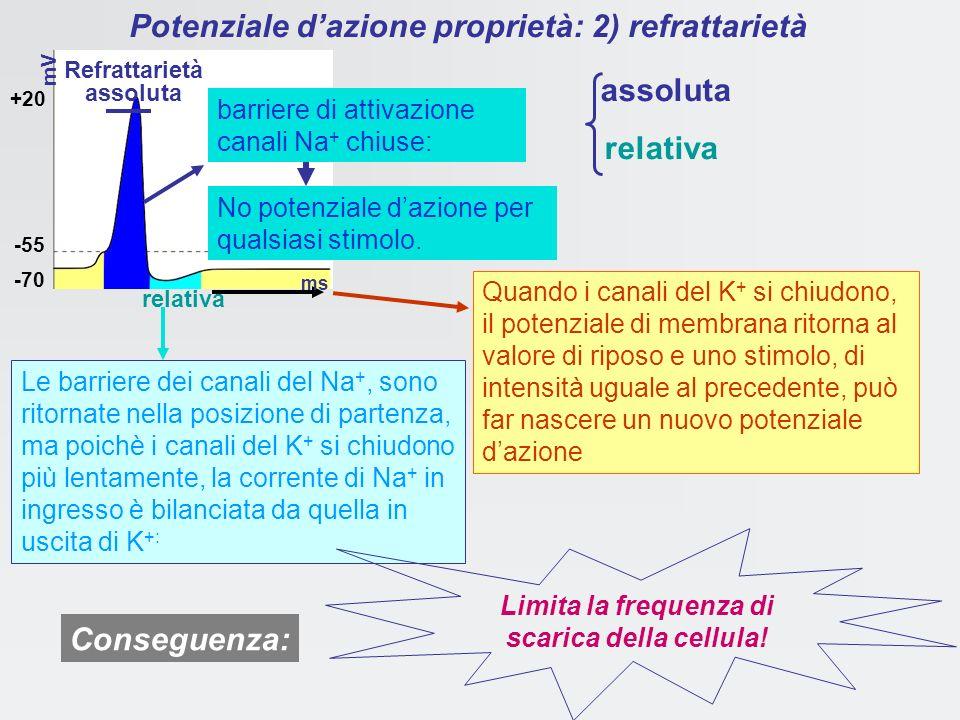 Potenziale d'azione proprietà: 2) refrattarietà