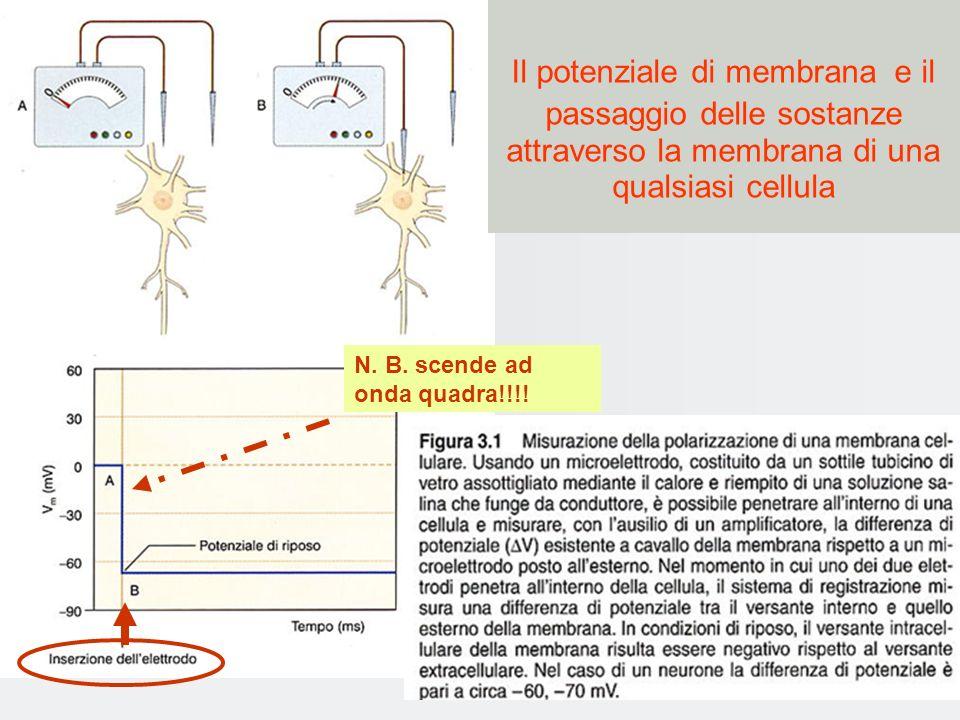 Il potenziale di membrana e il passaggio delle sostanze attraverso la membrana di una qualsiasi cellula