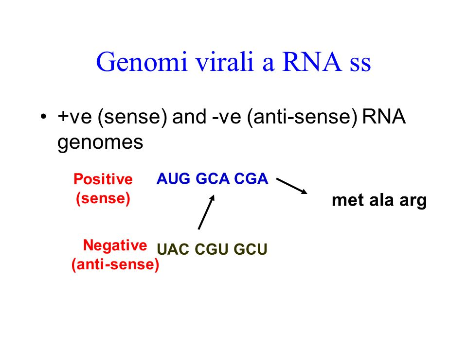 Genomi virali a RNA ss +ve (sense) and -ve (anti-sense) RNA genomes