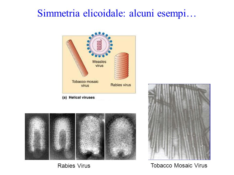 Simmetria elicoidale: alcuni esempi…