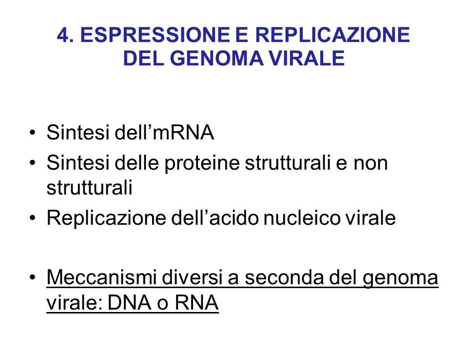 4. ESPRESSIONE E REPLICAZIONE DEL GENOMA VIRALE