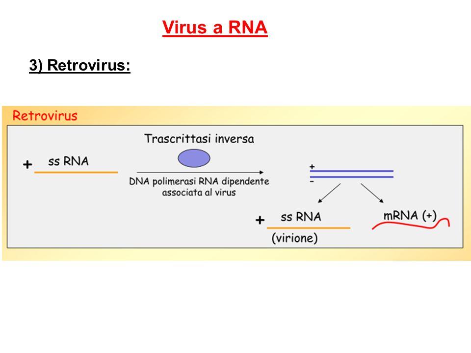 Virus a RNA 3) Retrovirus: