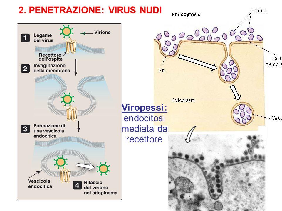 2. PENETRAZIONE: VIRUS NUDI