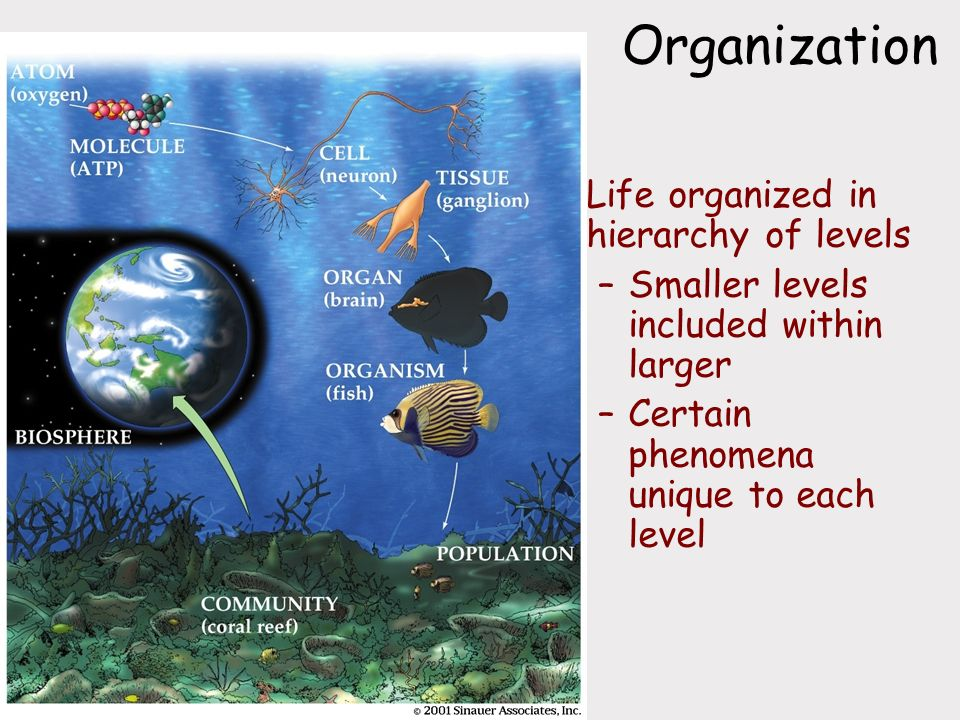 Organization Life organized in hierarchy of levels