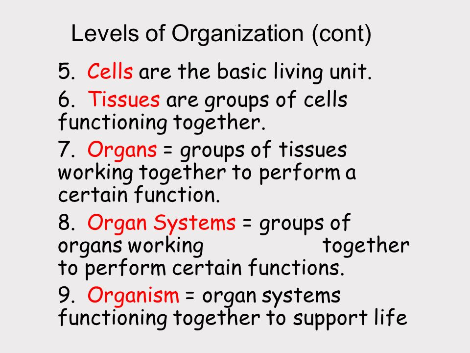 Levels of Organization (cont)