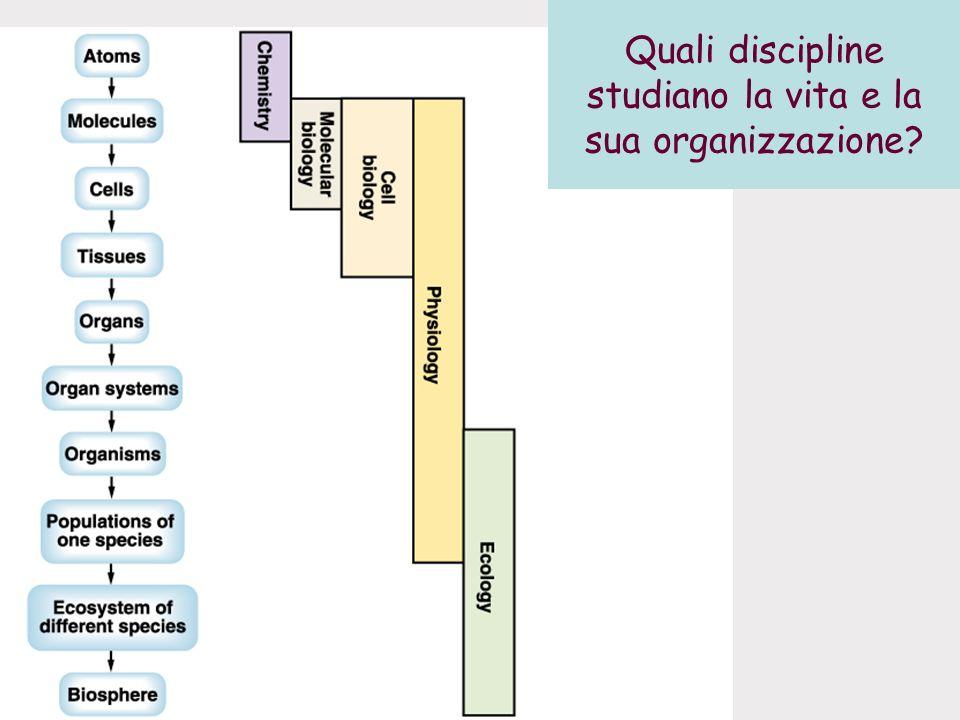 Quali discipline studiano la vita e la sua organizzazione