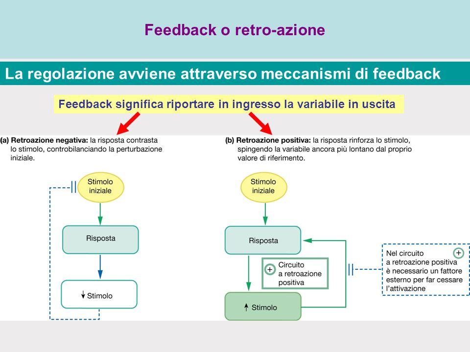 Feedback o retro-azione