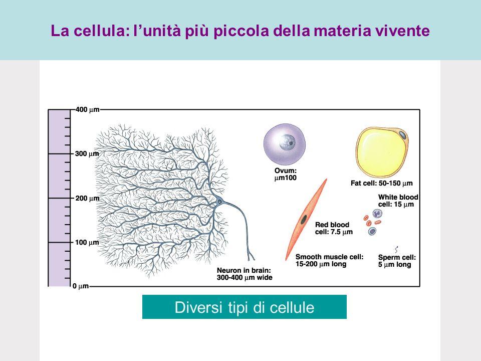 La cellula: l'unità più piccola della materia vivente