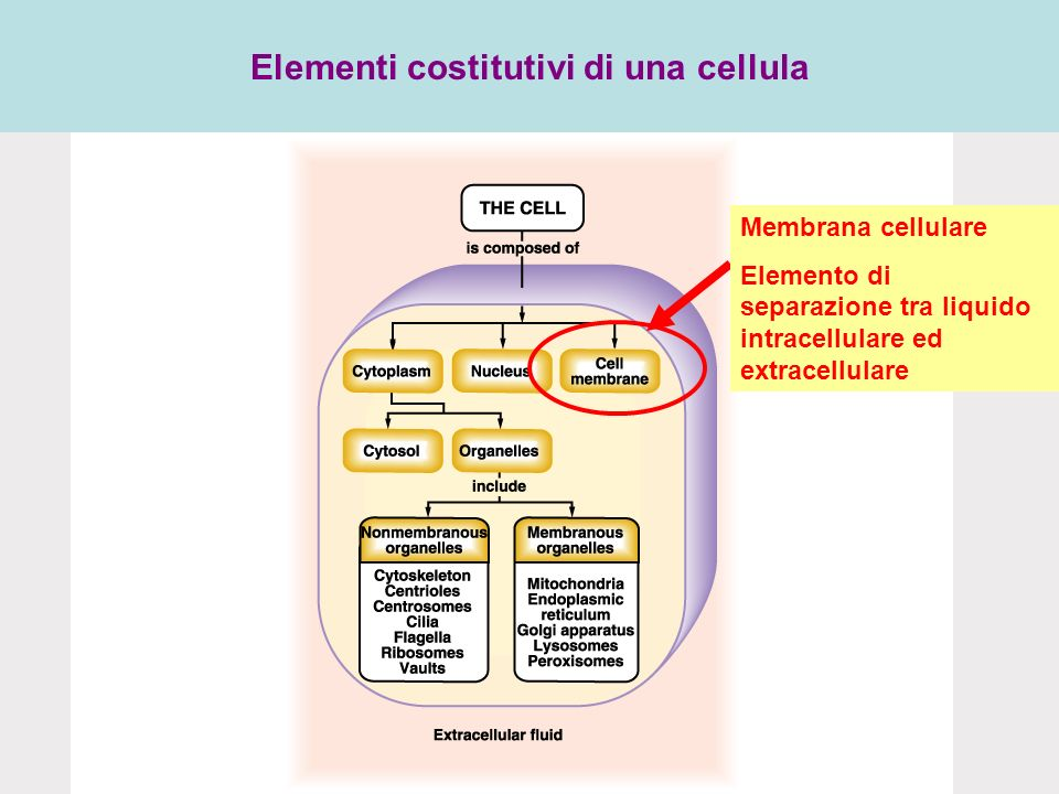 Elementi costitutivi di una cellula
