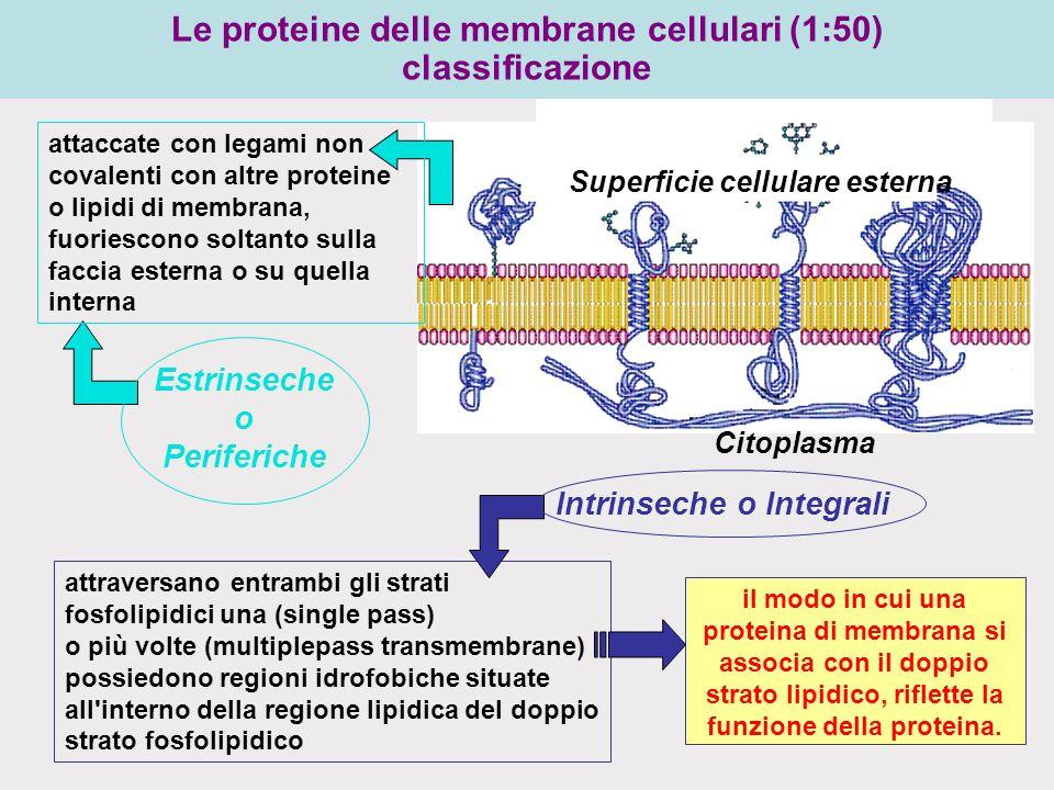 Le proteine delle membrane cellulari (1:50) classificazione