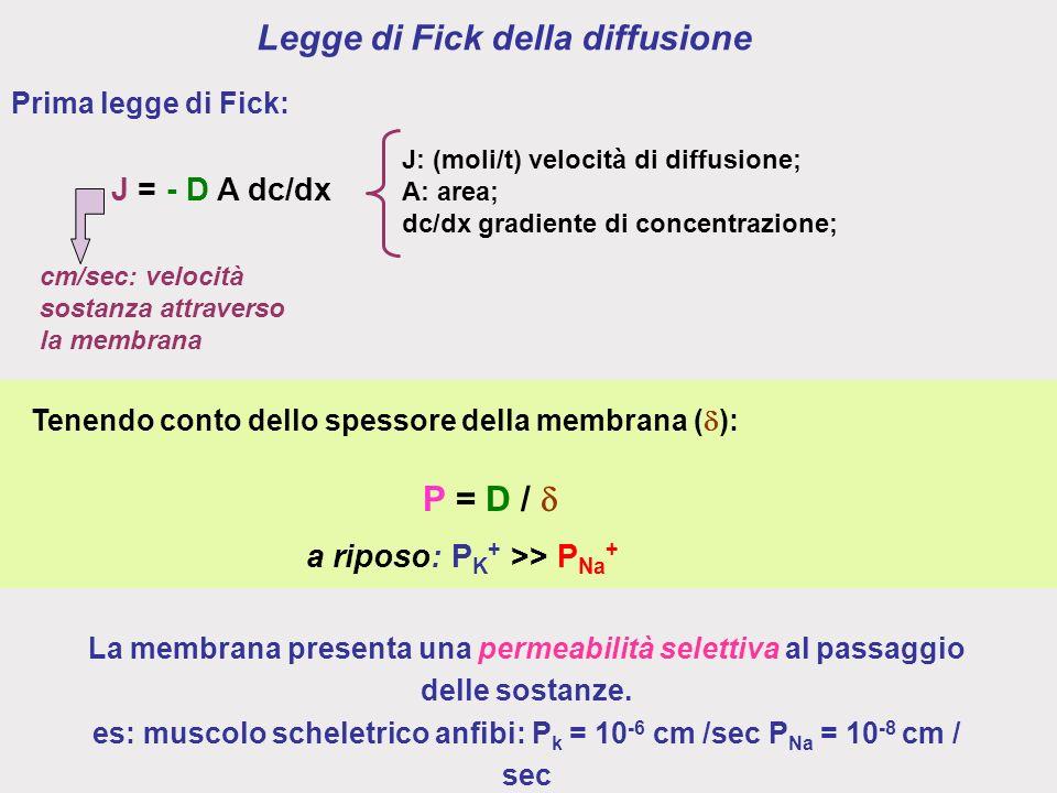 Legge di Fick della diffusione