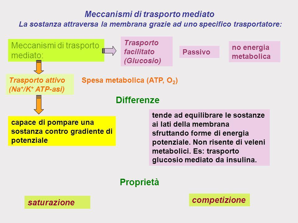 Meccanismi di trasporto mediato