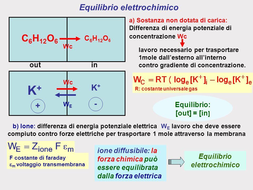 Equilibrio elettrochimico