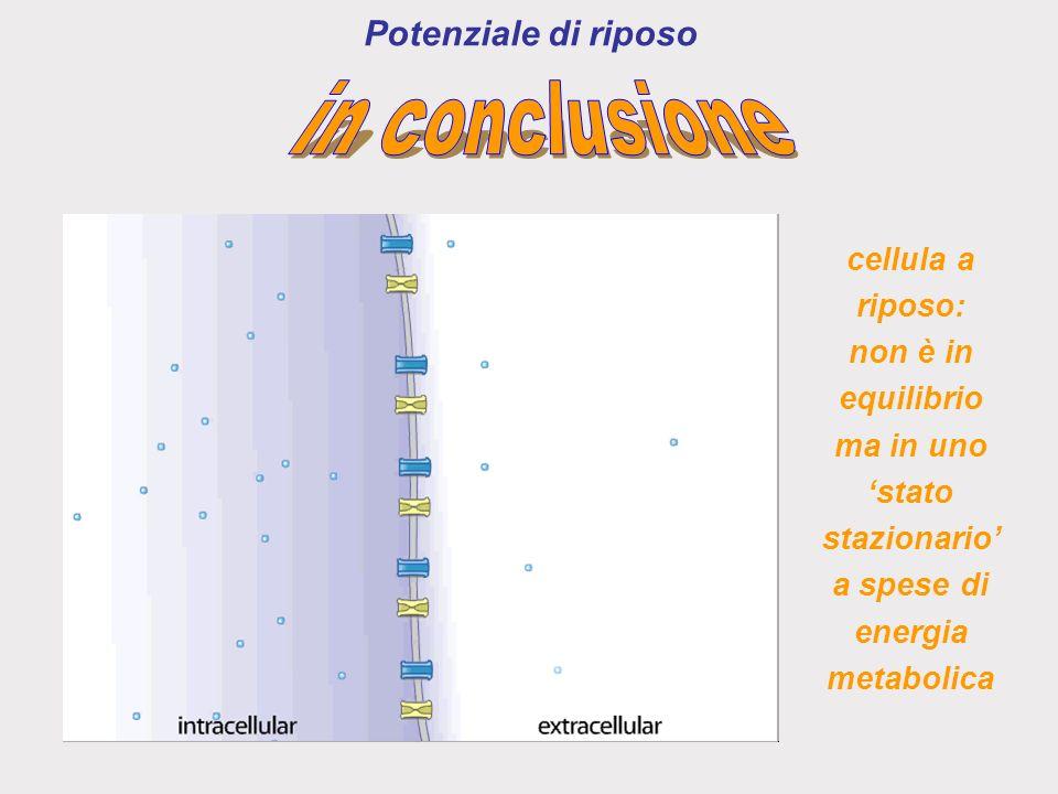in conclusione Potenziale di riposo cellula a riposo: