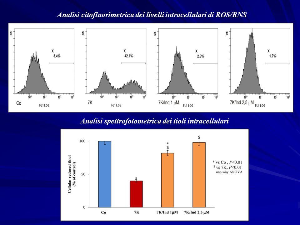 Analisi citofluorimetrica dei livelli intracellulari di ROS/RNS