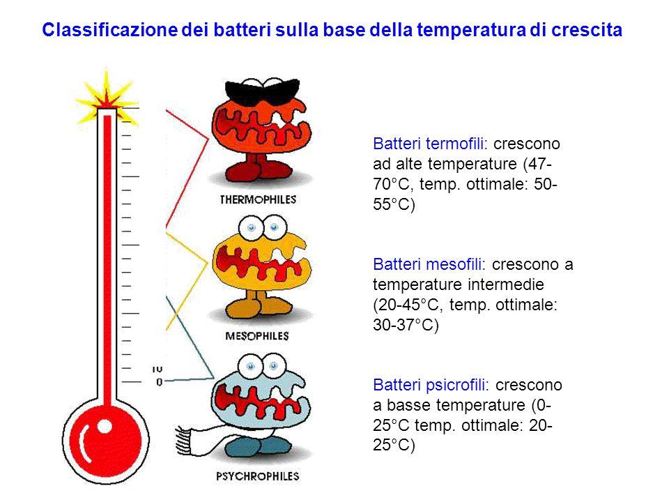 Classificazione dei batteri sulla base della temperatura di crescita
