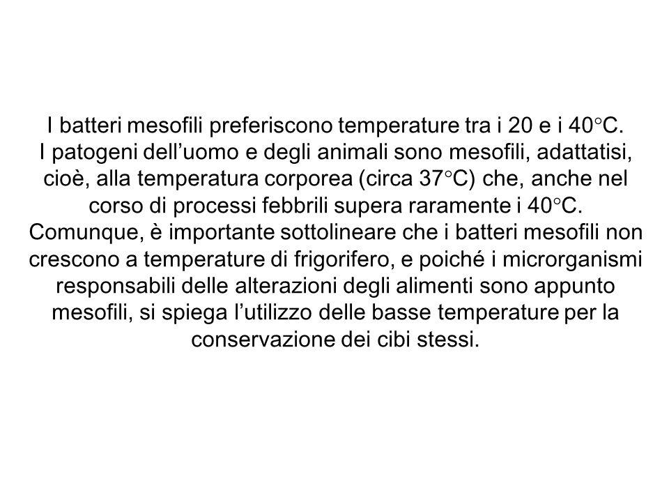 I batteri mesofili preferiscono temperature tra i 20 e i 40°C.
