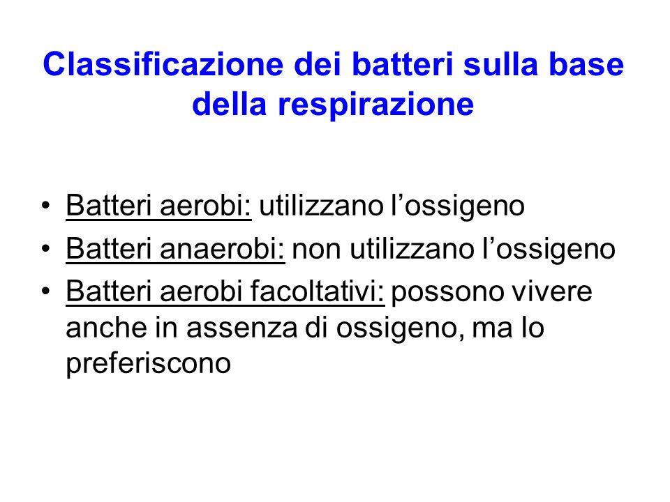 Classificazione dei batteri sulla base della respirazione