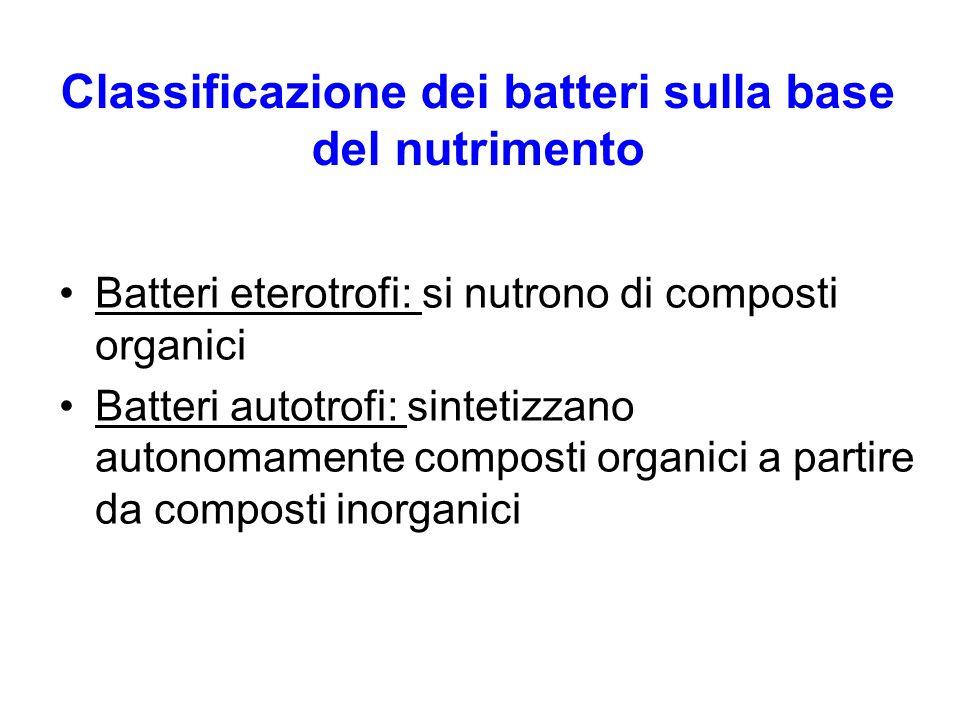 Classificazione dei batteri sulla base del nutrimento