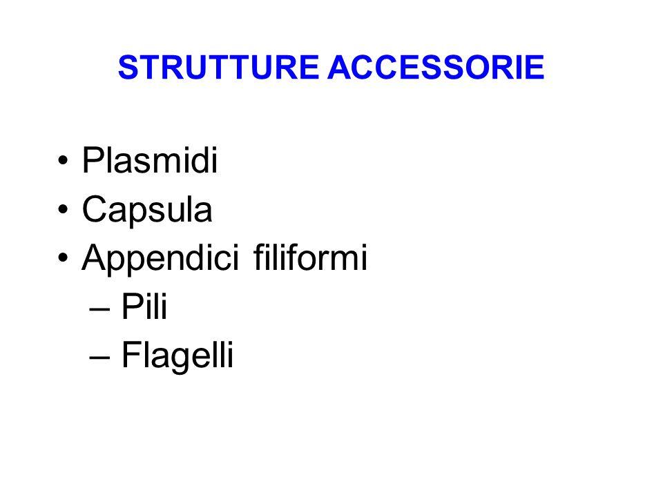 Plasmidi Capsula Appendici filiformi Pili Flagelli