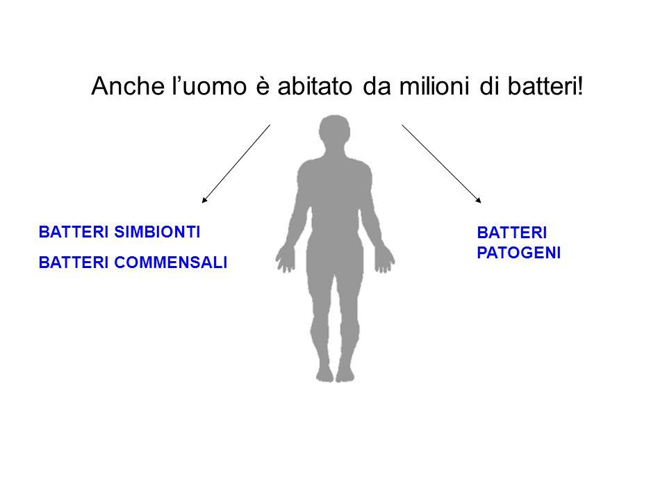 Anche l'uomo è abitato da milioni di batteri!