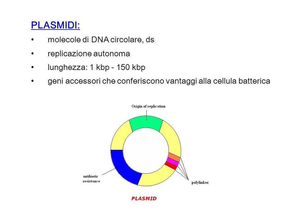 PLASMIDI: molecole di DNA circolare, ds replicazione autonoma