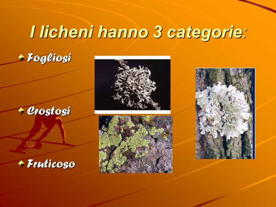 I licheni hanno 3 categorie: