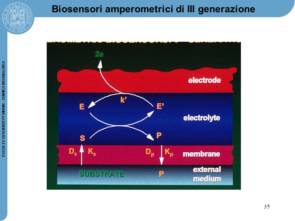 Biosensori amperometrici di III generazione