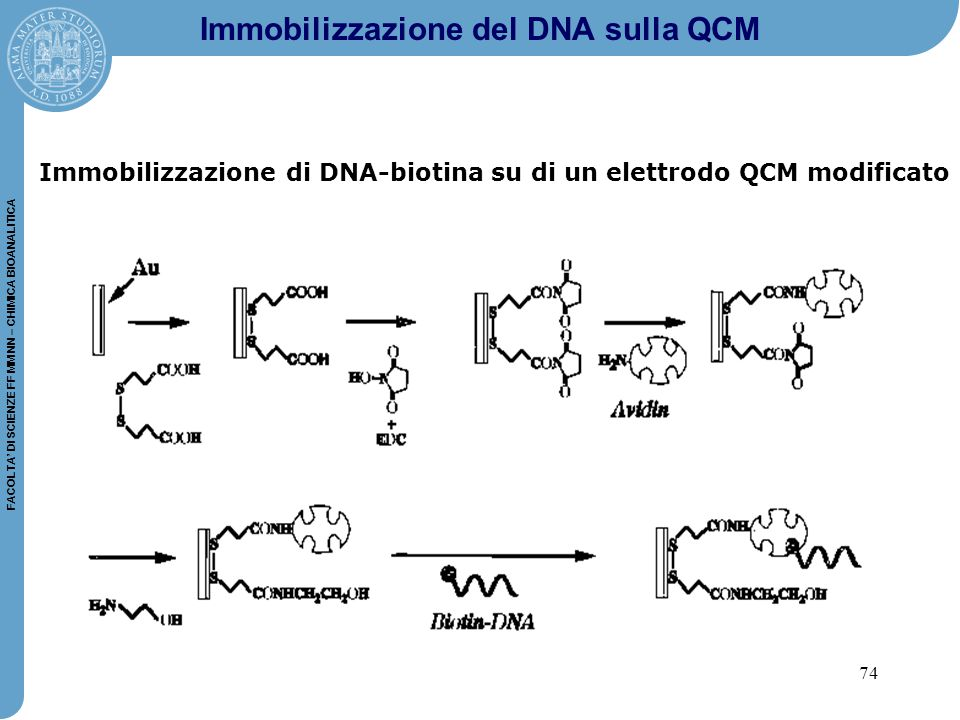 Immobilizzazione del DNA sulla QCM