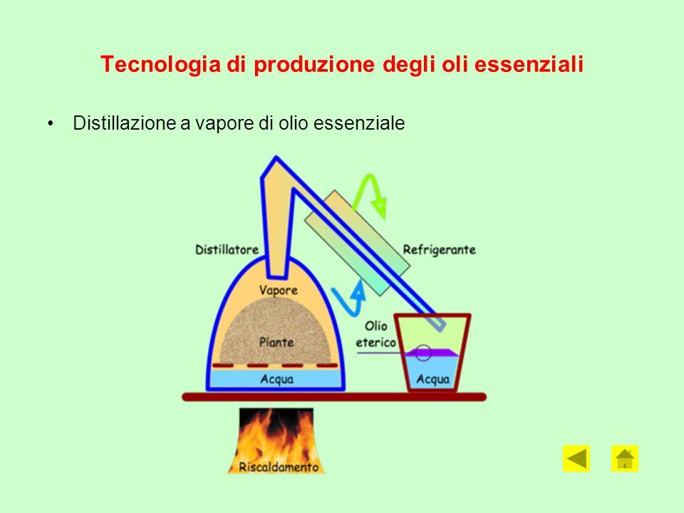 Tecnologia di produzione degli oli essenziali