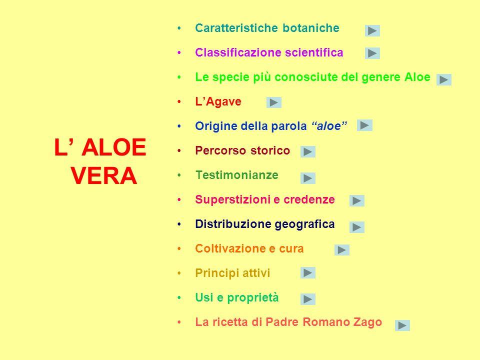 L' ALOE VERA Caratteristiche botaniche Classificazione scientifica