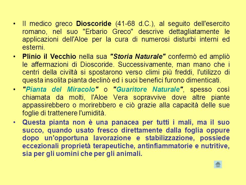 Il medico greco Dioscoride (41-68 d. C
