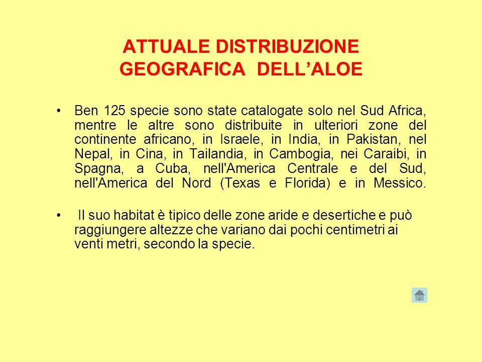 ATTUALE DISTRIBUZIONE GEOGRAFICA DELL'ALOE