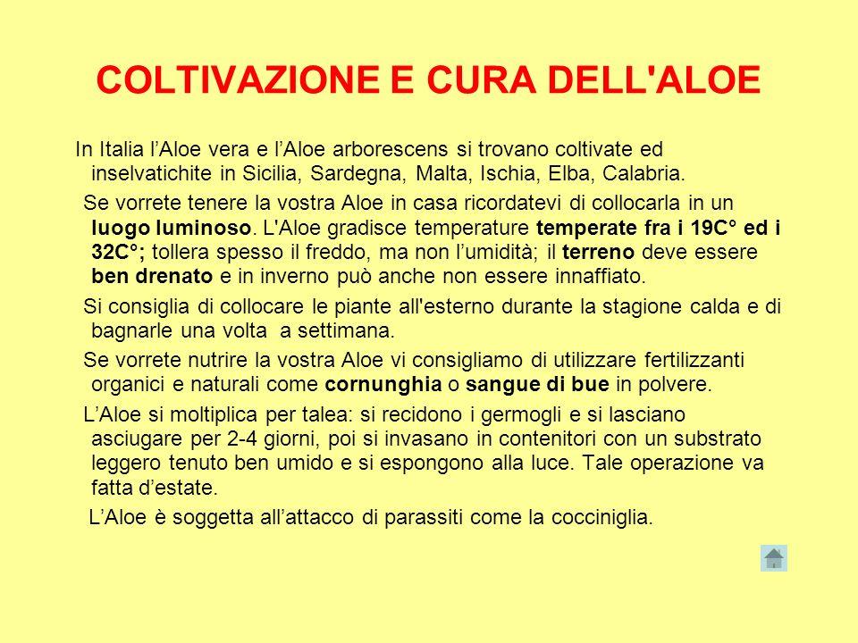 COLTIVAZIONE E CURA DELL ALOE