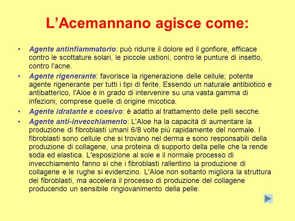 L'Acemannano agisce come: