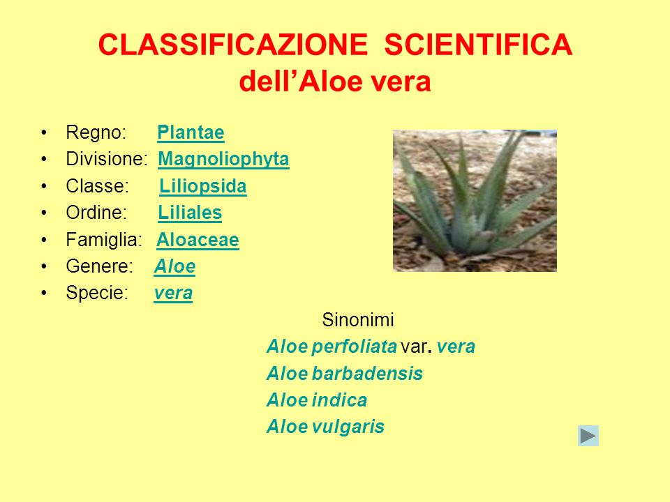 CLASSIFICAZIONE SCIENTIFICA dell'Aloe vera
