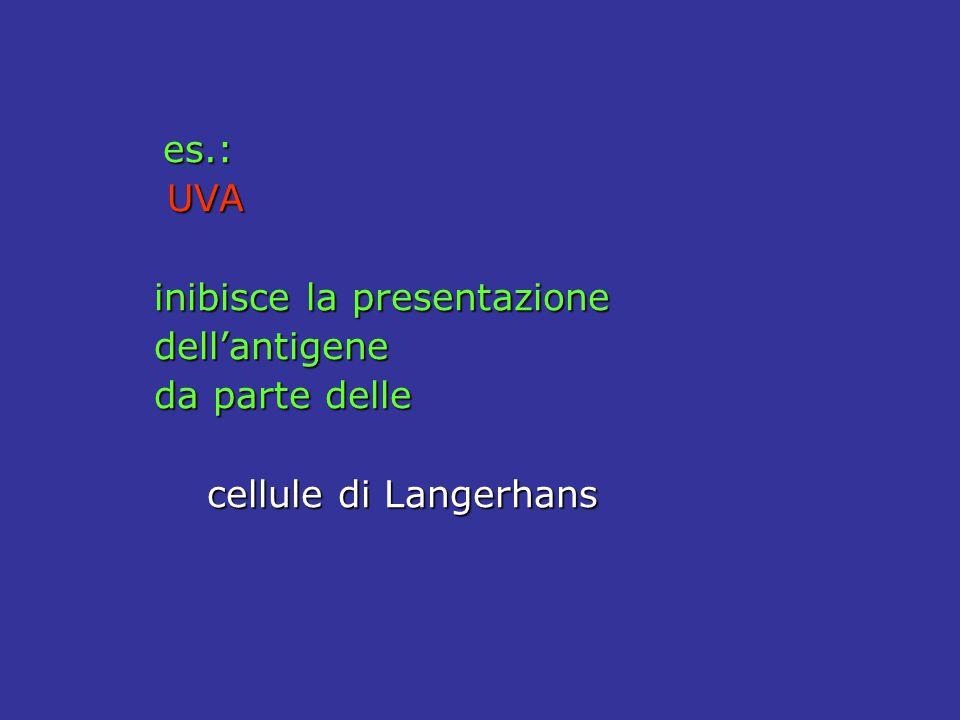 inibisce la presentazione dell'antigene da parte delle