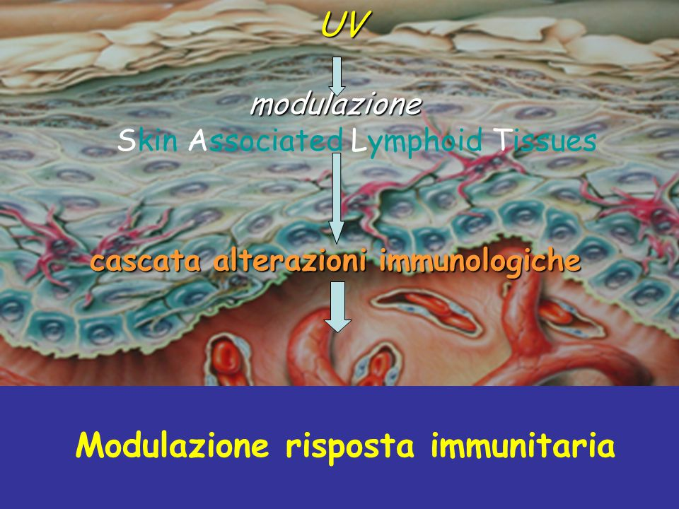 modulazione Skin Associated Lymphoid Tissues