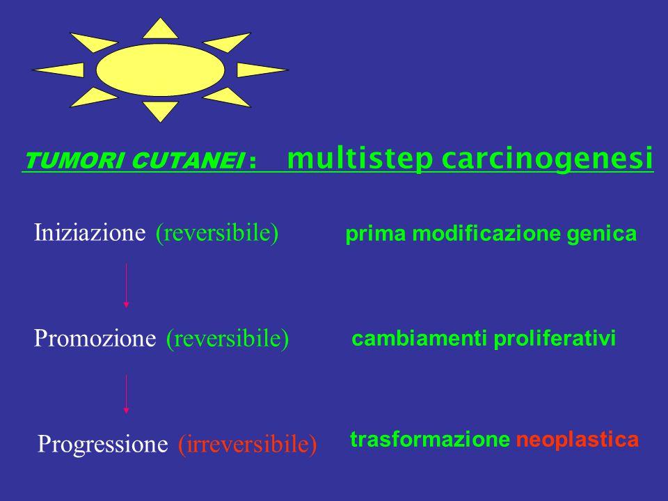TUMORI CUTANEI : multistep carcinogenesi