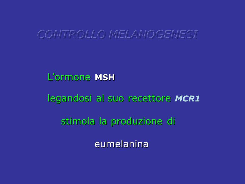CONTROLLO MELANOGENESI